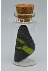 Nature Deco Urania Ripheus boven vleugel wensflesje
