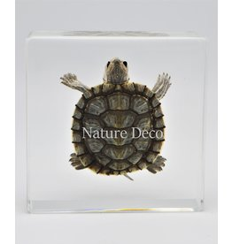 . Turtle in resin