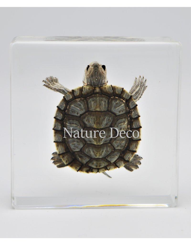 . Turtle in resin