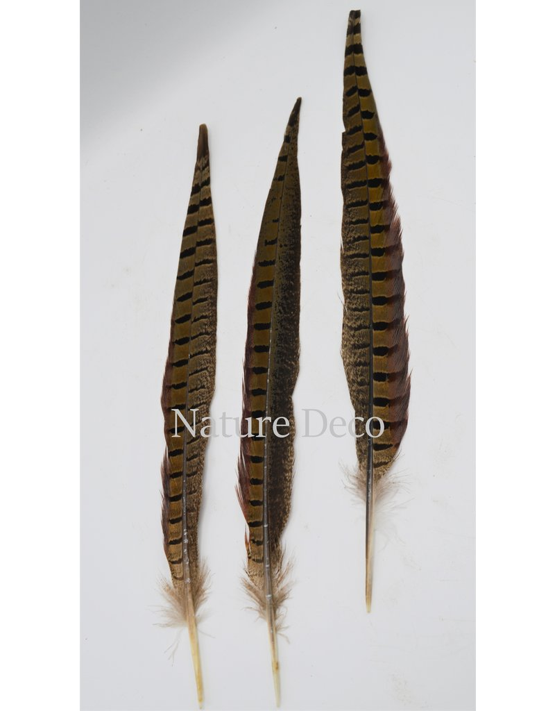 . Pheasant feather