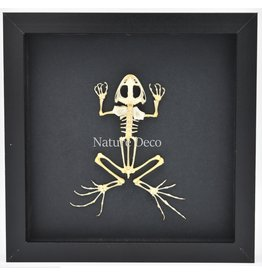Nature Deco Kikker skelet in luxe 3D lijst