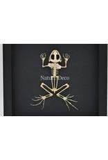 Nature Deco Frog skeleton in luxury 3D frame 22 x 22cm