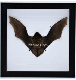 Nature Deco Flying bat in luxury 3D frame