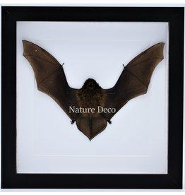 Nature Deco Vliegende vleermuis in luxe 3D lijst