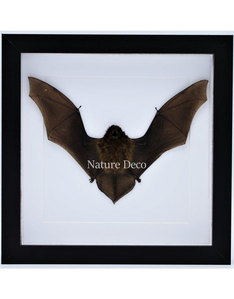 Nature Deco Flying bat in luxury 3D frame 22x22cm