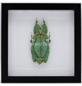 Nature Deco Wandelend blad XXL in luxe 3D lijst (Phyllium Giganteum)