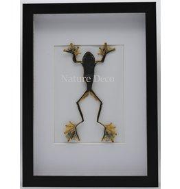 Nature Deco Kikker (RhacophorusRheinwardti) vrouw in luxe 3D lijst