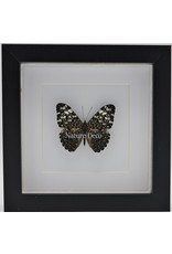 Nature Deco Hamadryas Iphthime in luxe 3D lijst