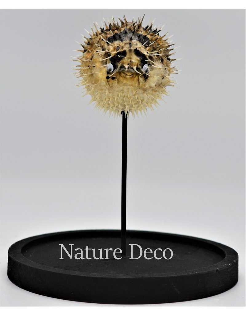 Nature Deco Egelvis in stolp  14 x 21cm