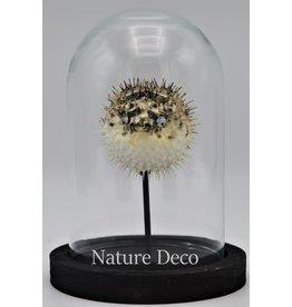Nature Deco Pufferfish in glass dome small