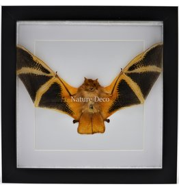 Nature Deco Kerivoula Picta (bat) in luxury 3D frame