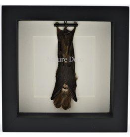 Nature Deco Bat hanging in 3D frame