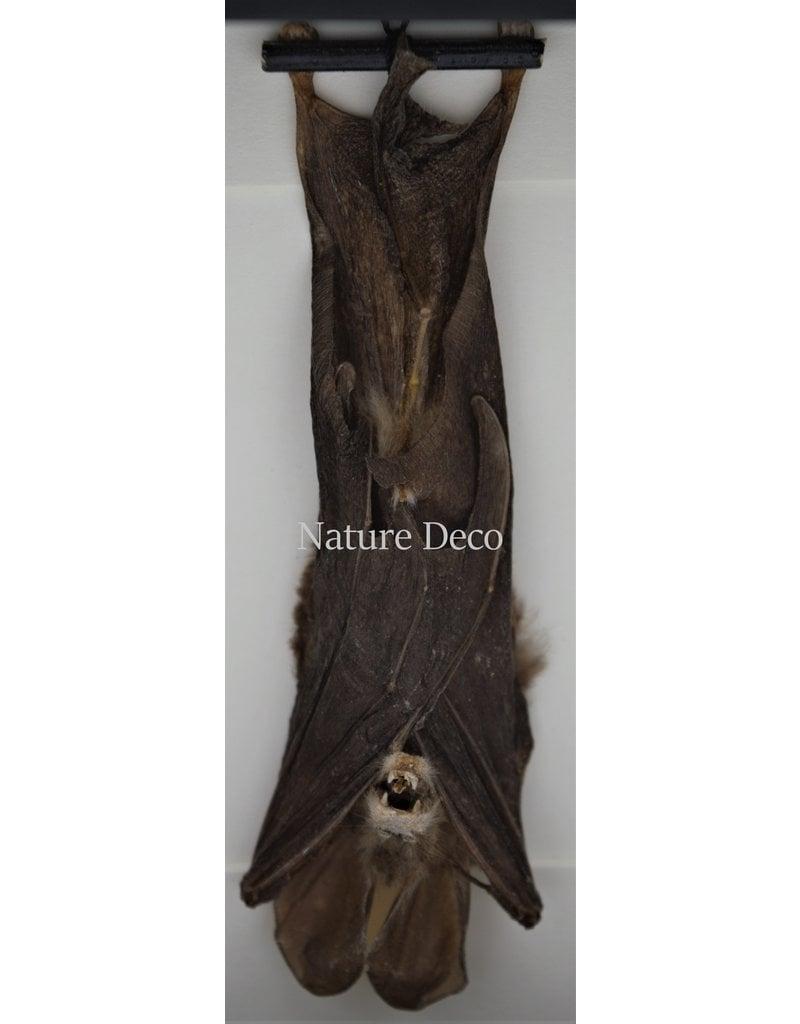 Nature Deco Bat hanging in 3D frame 14 x 14cm