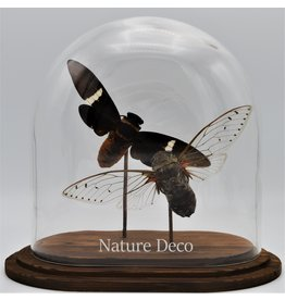 Nature Deco Cicade in ovale stolp