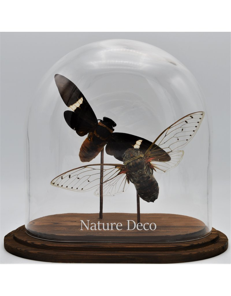 Nature Deco Cicade in ovale stolp 18x11x20cm