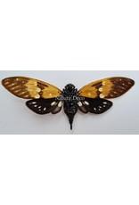 . (On)geprepareerde Ambragaeana Ambra (cicade)
