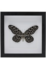 Nature Deco Idea Lynceus in luxury 3D frame 22 x 22cm