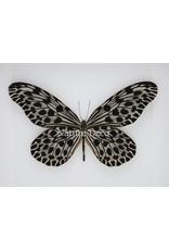 Nature Deco Idea Lynceus in luxe 3D lijst 22 x 22cm