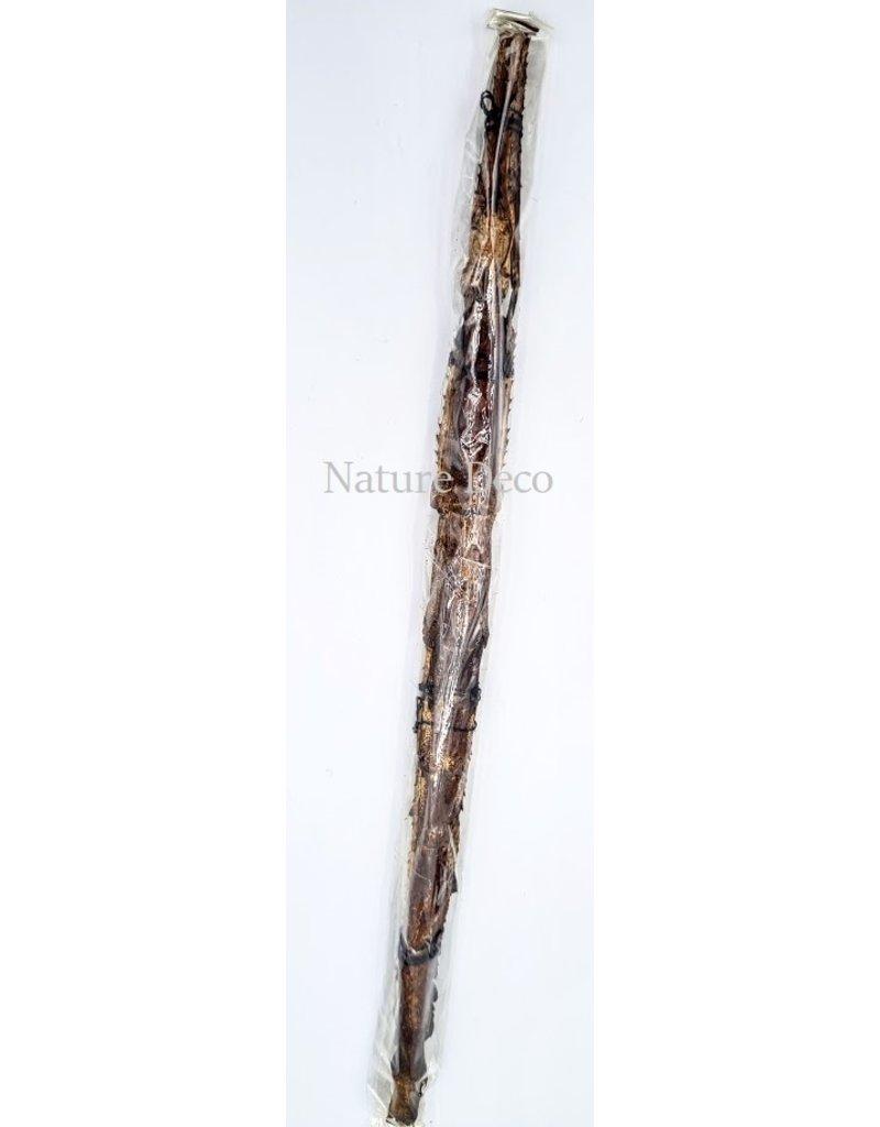 . Ongeprepareerde Tirachoidea Westwoodi (wandelede tak)