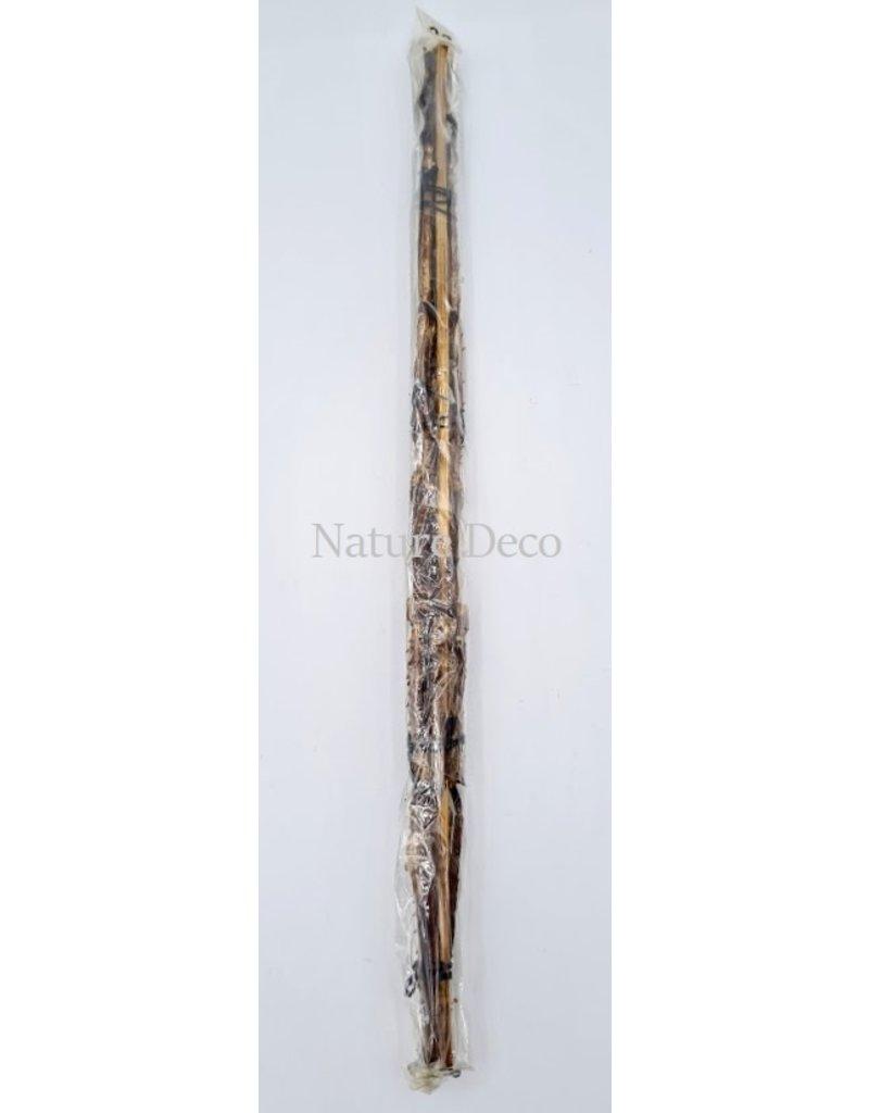 . Unmounted Tirachoidea Westwoodi (stick insect)