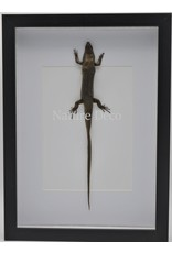 Nature Deco Skink in luxe 3D lijst 32 x 23,5cm