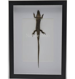 Nature Deco Skink in luxury 3D frame