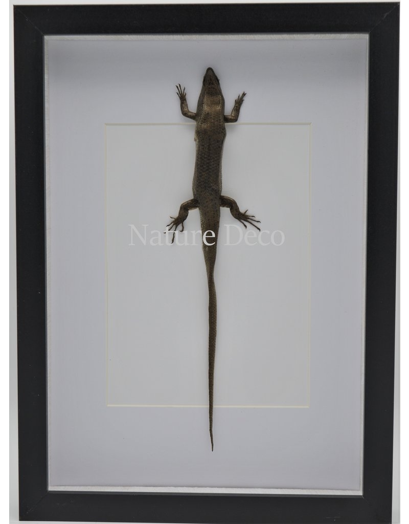 Nature Deco Skink in luxury 3D frame 32 x 23,5cm