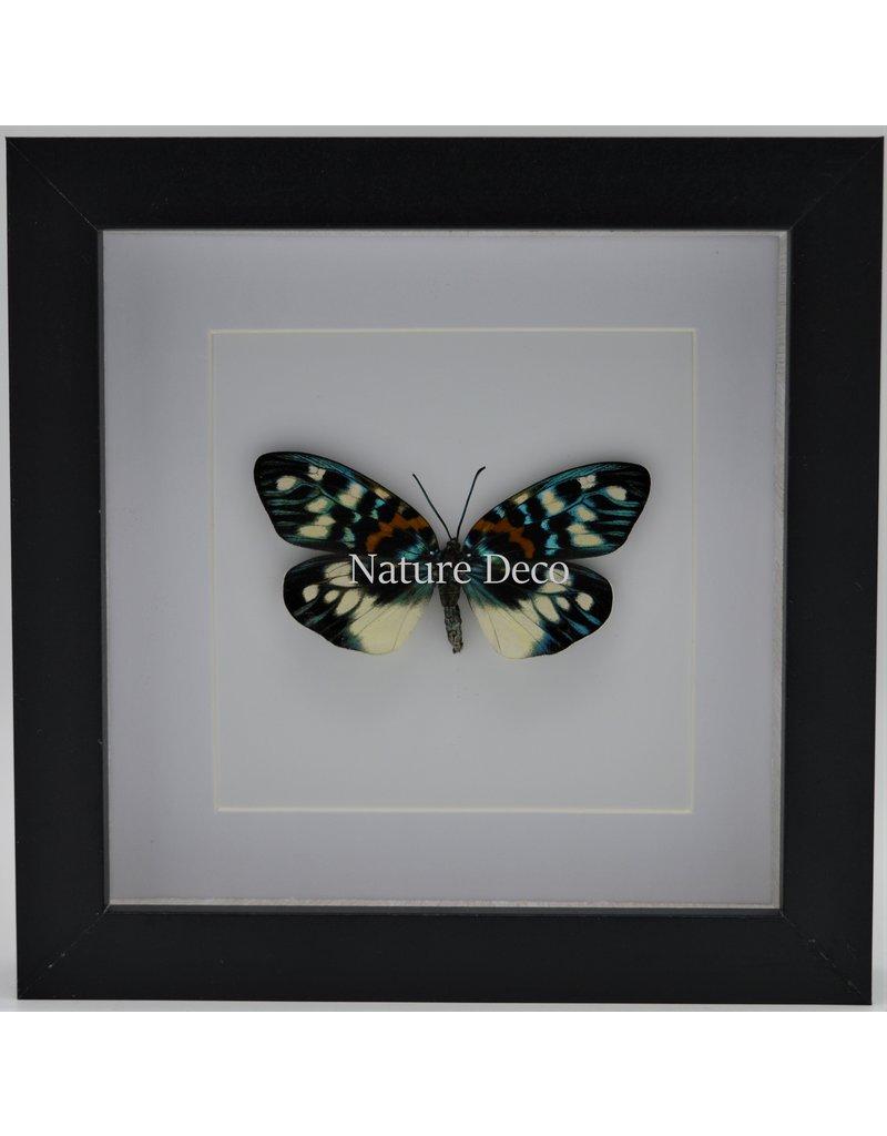 Nature Deco Erasmia Pulchella in luxe 3D lijst 17 x 17cm