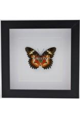 Nature Deco Cethosia Hypsea in luxury 3D frame 17 x 17cm