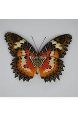 Nature Deco Cethosia Hypsea in luxe 3D lijst 17 x 17cm