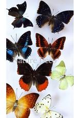 . Ongeprepareerde vlinders luxe mix 10st