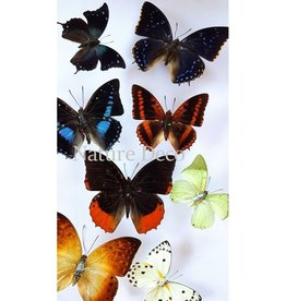 . Unmounted butterflies luxury mix 10 pieces