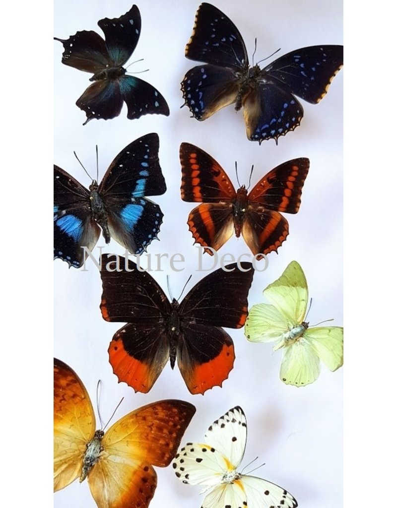 . Unmounted butterflies luxury mix 10 pieces