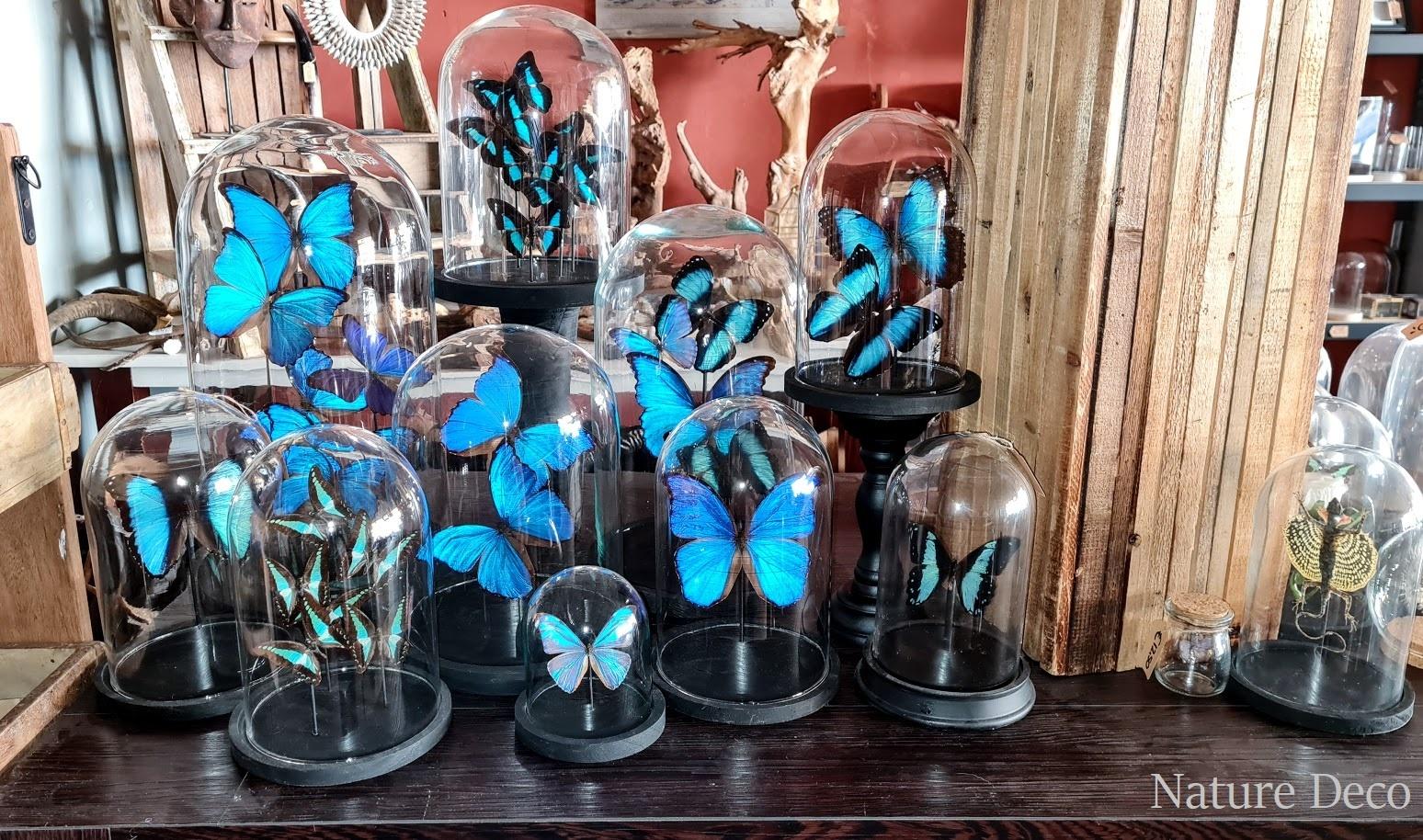 Morpho glass domes