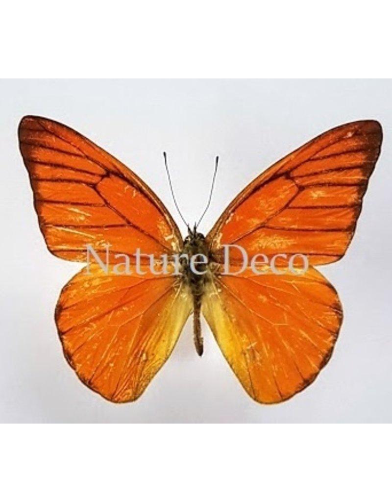 Nature Deco Oorbel hangend Nero