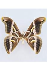Nature Deco Oorbel hangend Ricini