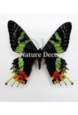 Nature Deco Keychain Urania