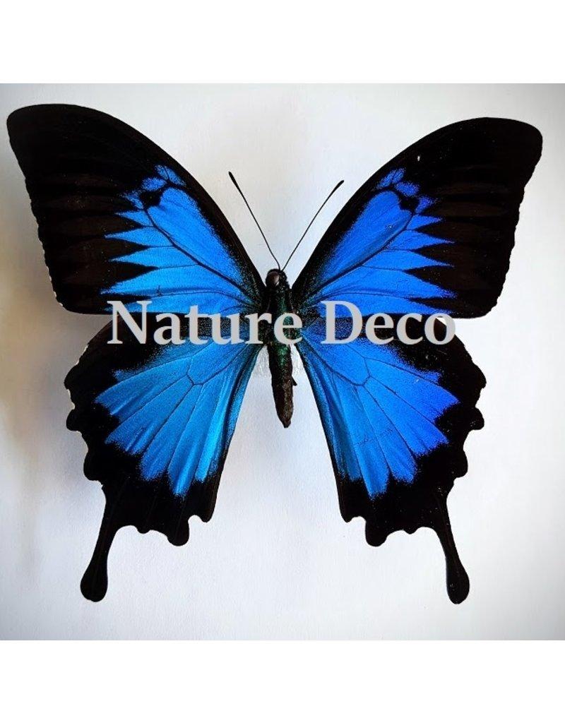 Nature Deco Sleutelhanger Ulysess