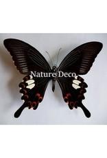 Nature Deco Sleutelhanger Helenus