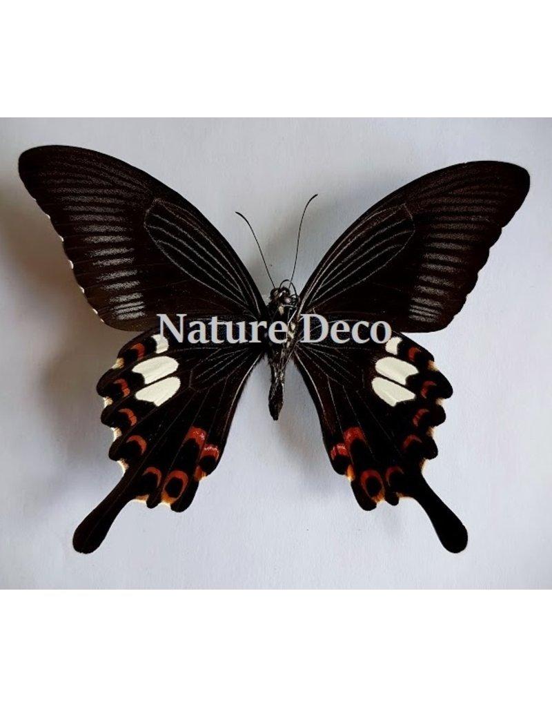 Nature Deco Keychain Helenus