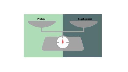 Protein & Feuchtigkeits- Balance