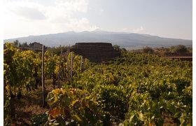 Custodi delle vigne dell'Etna