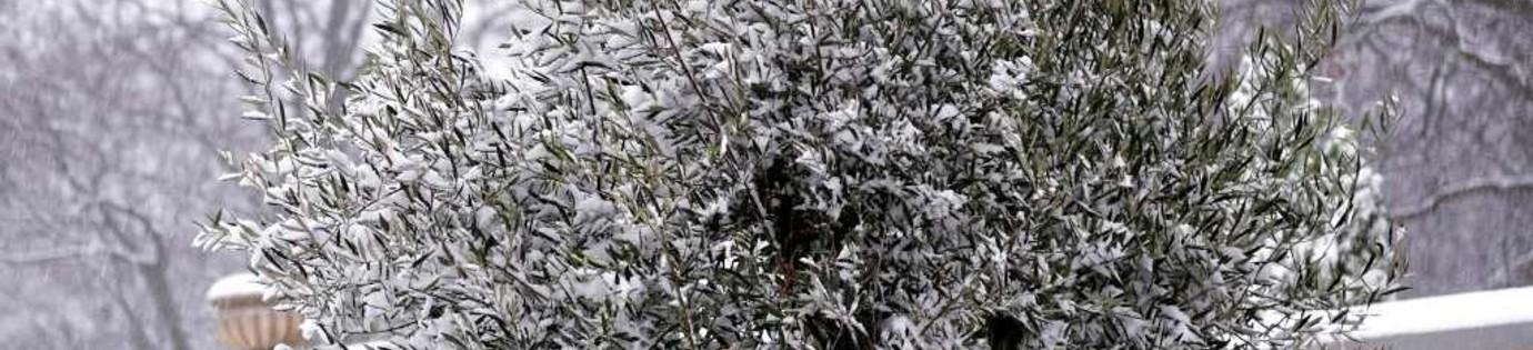 Planten beschermd tegen de kou met noppenfolie