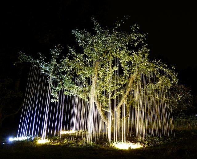 warm witte lampen verlichten boom