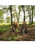 Euronetz Euronetz Wildschweinnetz Kombi 50 m / 75 cm Einzelspitze