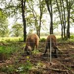 Euronetz Original Euronetz Wildschweinnetz Kombi 50 m / 75 cm Einzelspitze