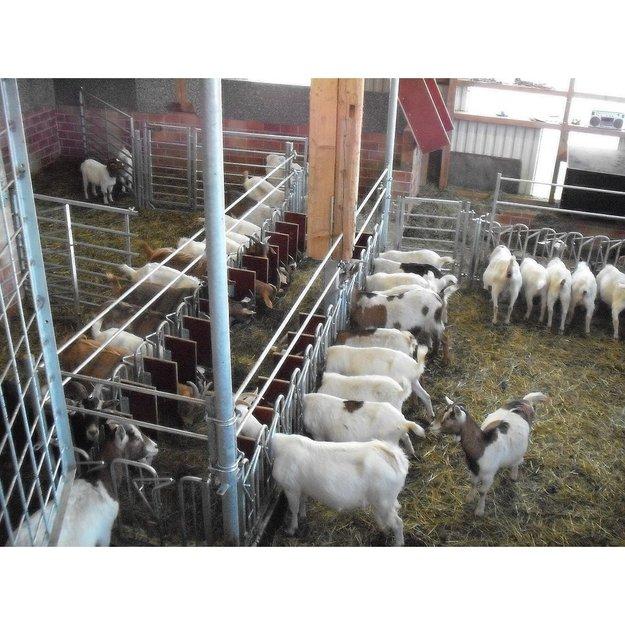 Köhler Holz- und Metallverarbeitung Fressgitter (Melkstand) für Schafe und Ziegen 250 x 60 cm
