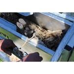 Köhler Holz- und Metallverarbeitung Fang- und Behandlungsstand KWIK für Schafe und Ziegen