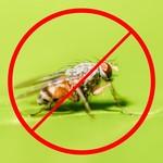 Horizont Elektrische Fliegenfalle/Insektenvernichter INSECT-O-KILL 40 plus - 2 x 20 Watt