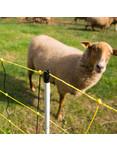 Horizont Vertikal-Netz für Schafe - 90 cm/50 m (Einzelspitze)